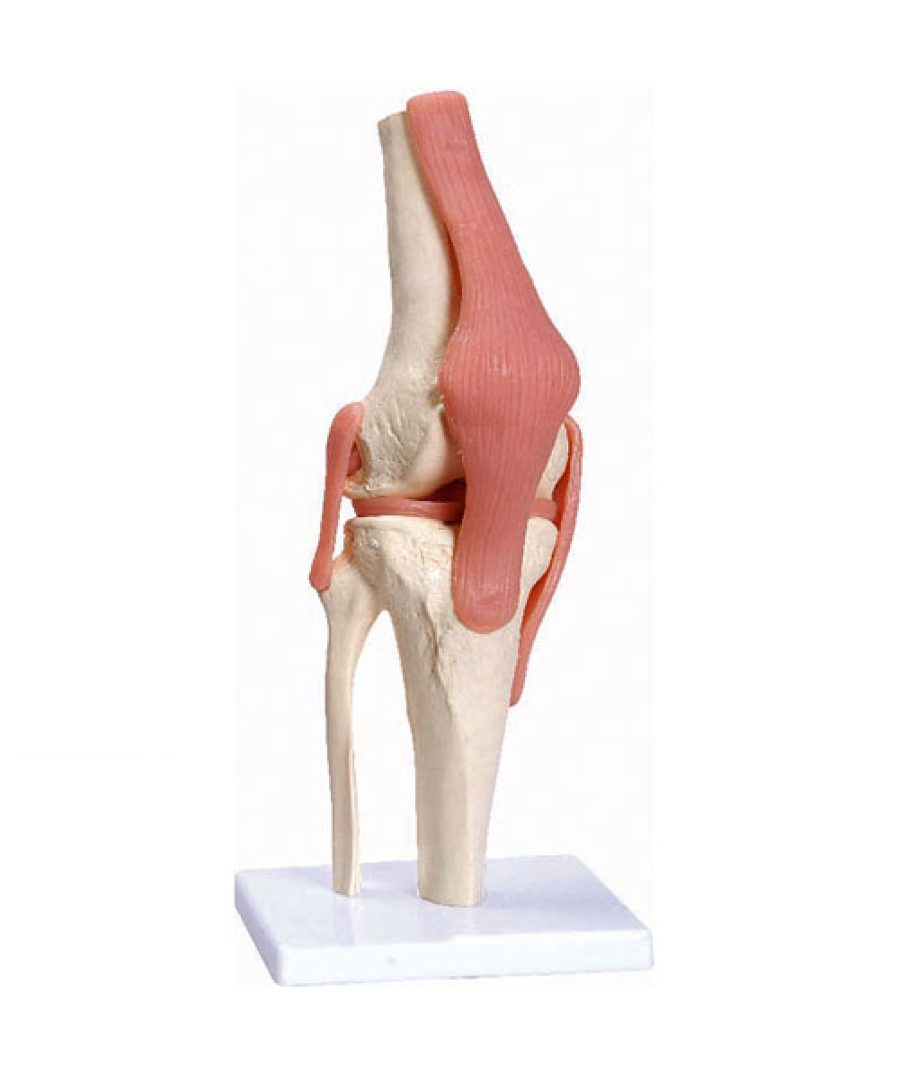 DELUXE FUNCTIONAL KNEE JOINT MODEL A82/1 - Model - Sports ...